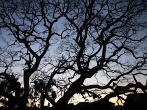血管みたいな木(ブーママ撮影)<br>Lumix DMC-GF1+20mm/F1.7